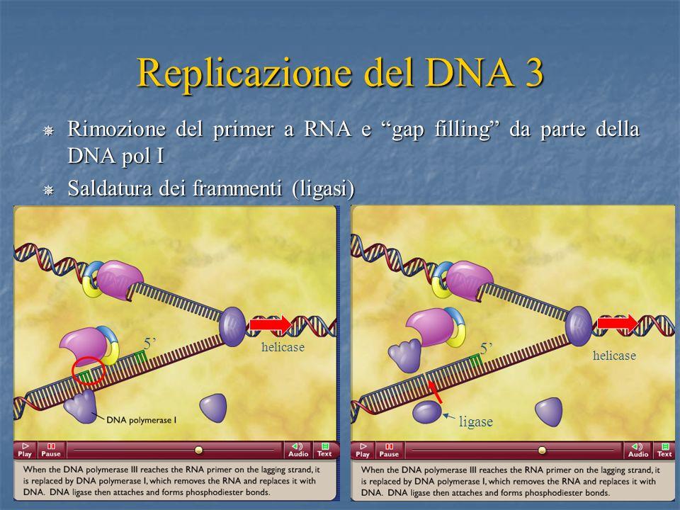 22 Replicazione del DNA 3 Rimozione del primer a RNA e gap filling da parte della DNA pol I Rimozione del primer a RNA e gap filling da parte della DN