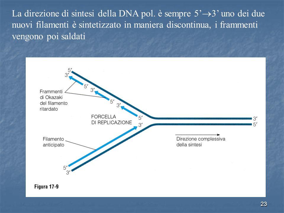 23 La direzione di sintesi della DNA pol. è sempre 5 3 uno dei due nuovi filamenti è sintetizzato in maniera discontinua, i frammenti vengono poi sald
