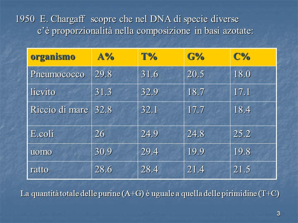 3 1950 E. Chargaff scopre che nel DNA di specie diverse cè proporzionalità nella composizione in basi azotate: cè proporzionalità nella composizione i
