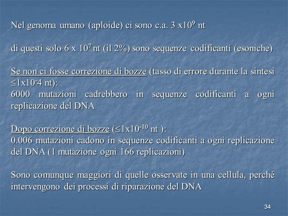 34 Nel genoma umano (aploide) ci sono c.a. 3 x10 9 nt di questi solo 6 x 10 7 nt (il 2%) sono sequenze codificanti (esoniche) Se non ci fosse correzio