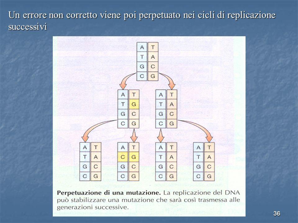 36 Un errore non corretto viene poi perpetuato nei cicli di replicazione successivi