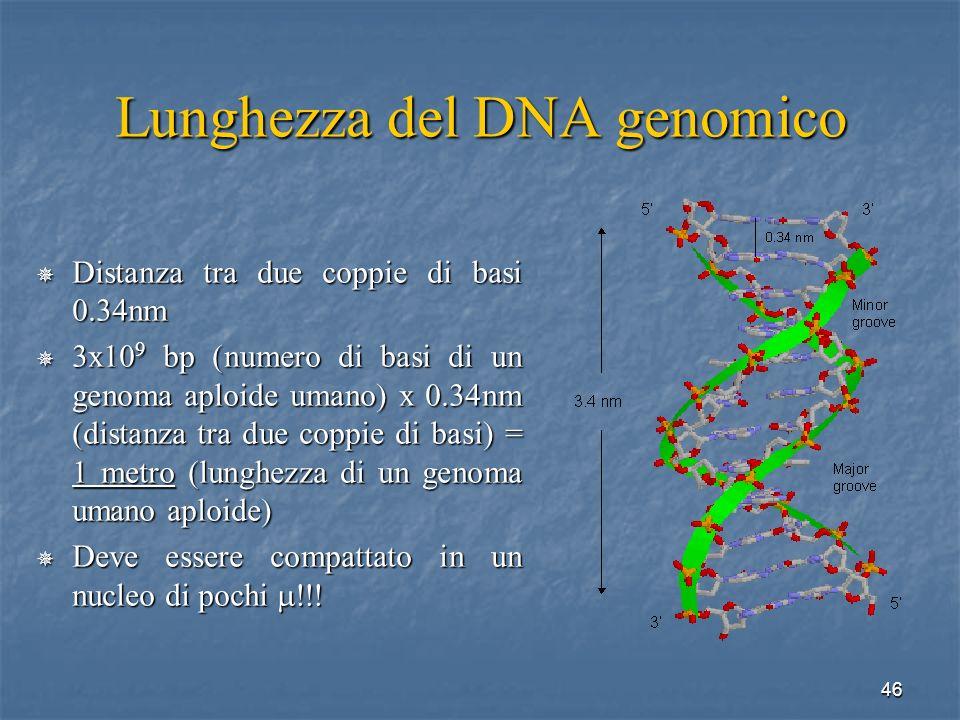 46 Lunghezza del DNA genomico Distanza tra due coppie di basi 0.34nm Distanza tra due coppie di basi 0.34nm 3x10 9 bp (numero di basi di un genoma apl