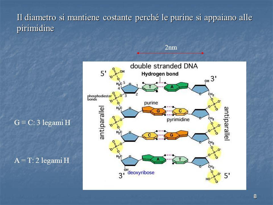 8 Il diametro si mantiene costante perché le purine si appaiano alle pirimidine 2nm G C: 3 legami H A = T: 2 legami H
