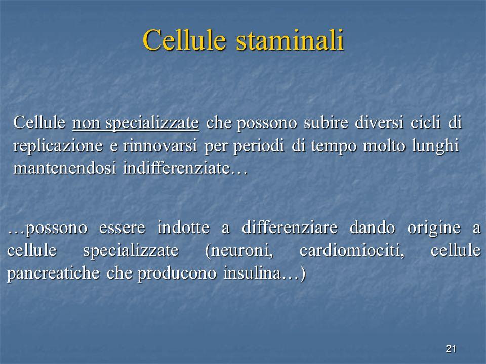 21 Cellule staminali Cellule non specializzate che possono subire diversi cicli di replicazione e rinnovarsi per periodi di tempo molto lunghi mantene