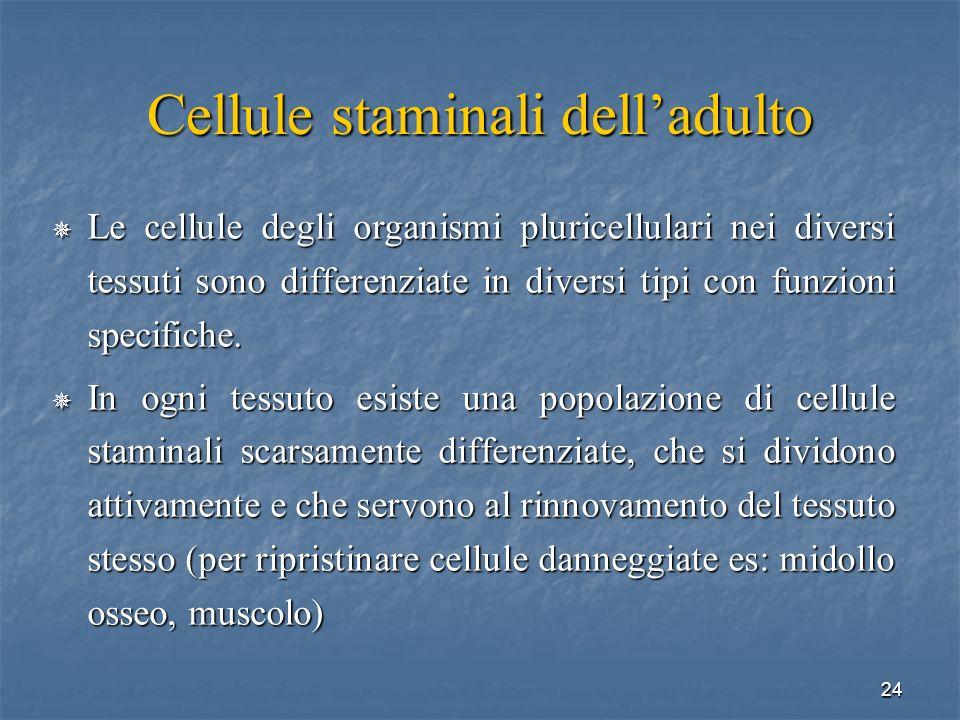 24 Cellule staminali delladulto Le cellule degli organismi pluricellulari nei diversi tessuti sono differenziate in diversi tipi con funzioni specific