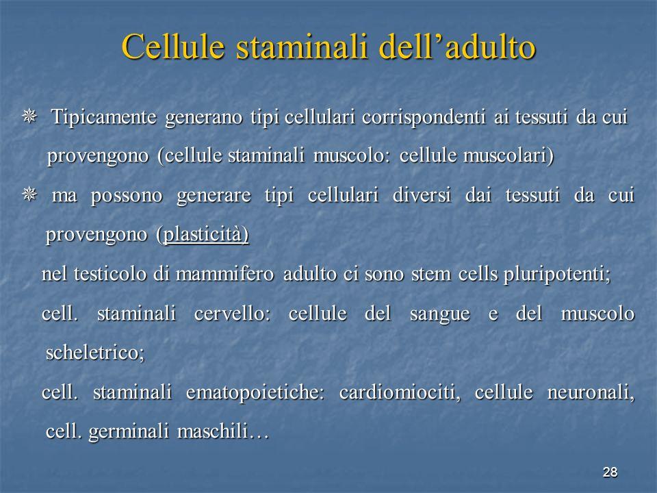 28 Cellule staminali delladulto Tipicamente generano tipi cellulari corrispondenti ai tessuti da cui Tipicamente generano tipi cellulari corrispondent