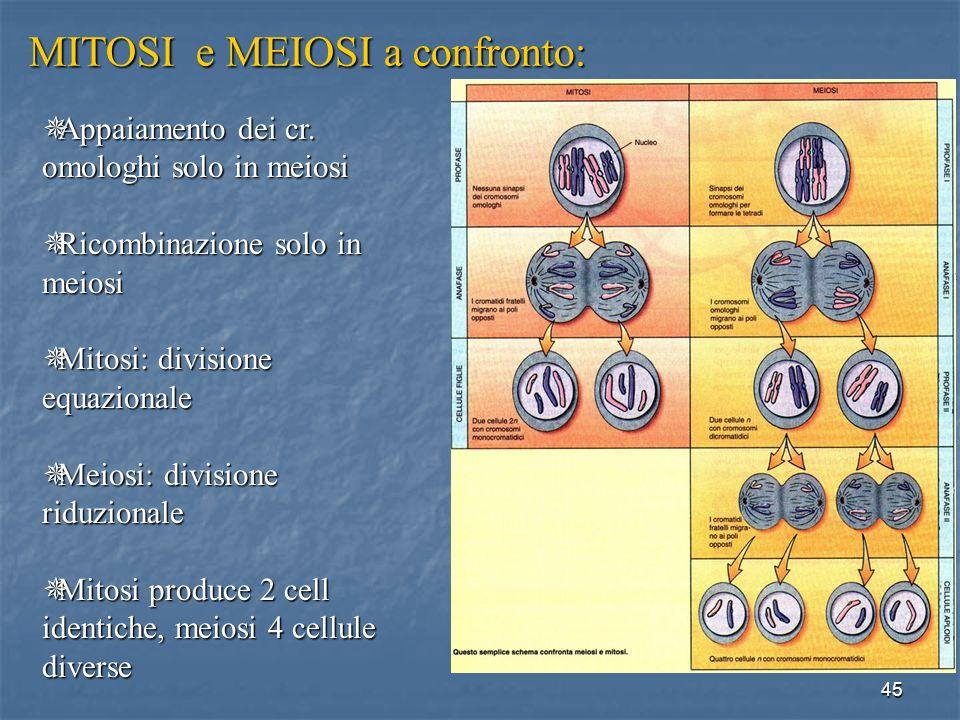 45 Appaiamento Appaiamento dei cr. omologhi solo in meiosi Ricombinazione Ricombinazione solo in meiosi Mitosi: Mitosi: divisione equazionale Meiosi: