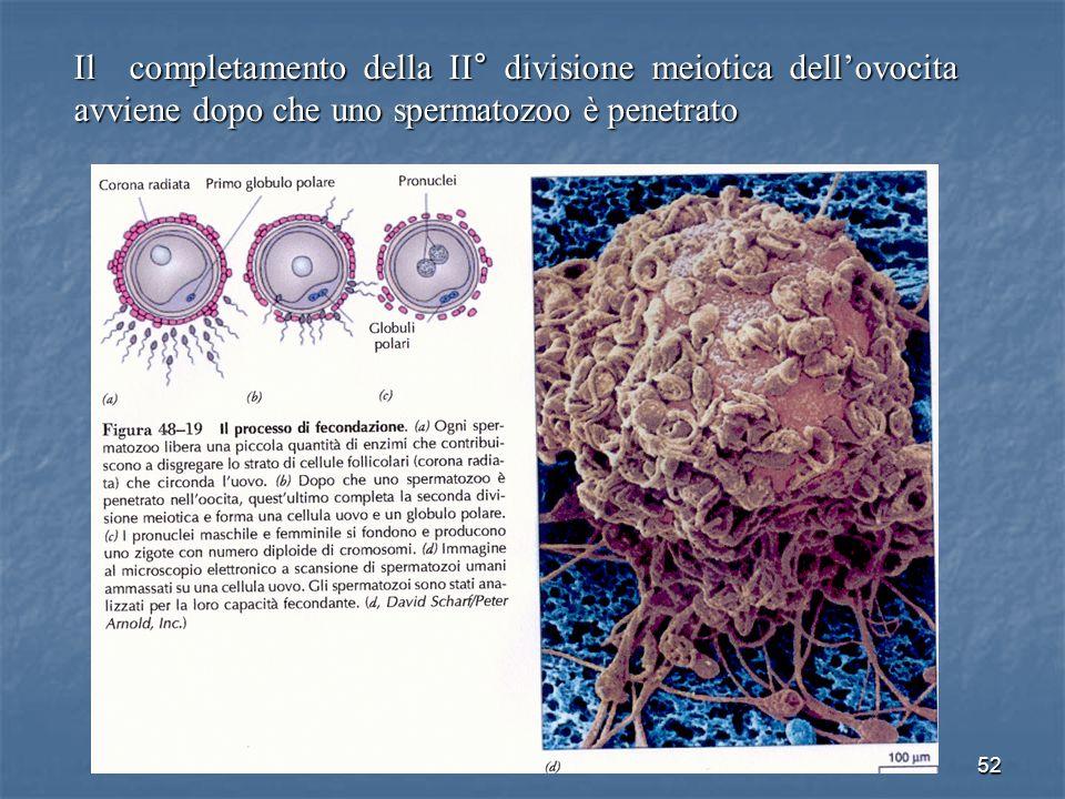 52 Il completamento della II° divisione meiotica dellovocita avviene dopo che uno spermatozoo è penetrato