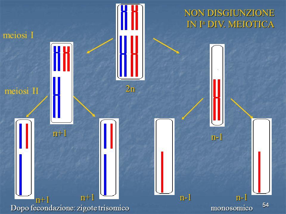 54 n-1 n-1n+1 n+1 meiosi I meiosi II 2n n+1 n-1 NON DISGIUNZIONE IN I a DIV. MEIOTICA IN I a DIV. MEIOTICA Dopo fecondazione: zigote trisomicomonosomi