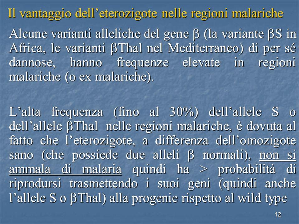 12 Il vantaggio delleterozigote nelle regioni malariche Alcune varianti alleliche del gene (la variante S in Africa, le varianti Thal nel Mediterraneo