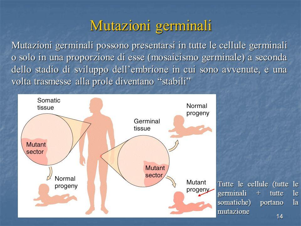 14 Mutazioni germinali Mutazioni germinali possono presentarsi in tutte le cellule germinali o solo in una proporzione di esse (mosaicismo germinale)