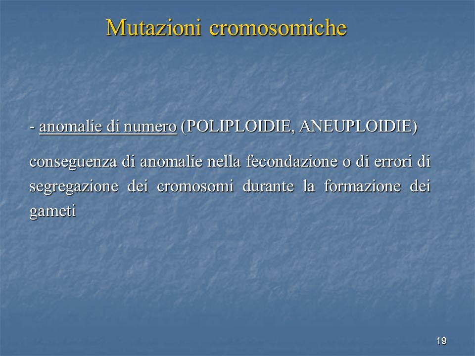 19 - anomalie di numero (POLIPLOIDIE, ANEUPLOIDIE) conseguenza di anomalie nella fecondazione o di errori di segregazione dei cromosomi durante la for