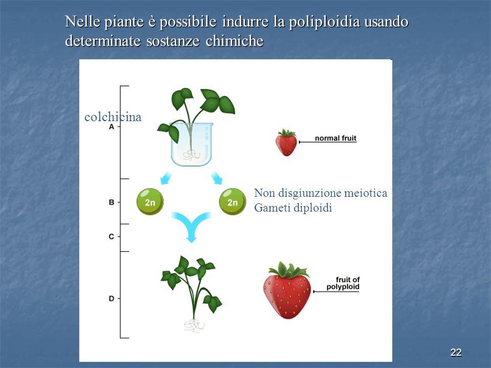 22 Nelle piante è possibile indurre la poliploidia usando determinate sostanze chimiche colchicina Non disgiunzione meiotica Gameti diploidi