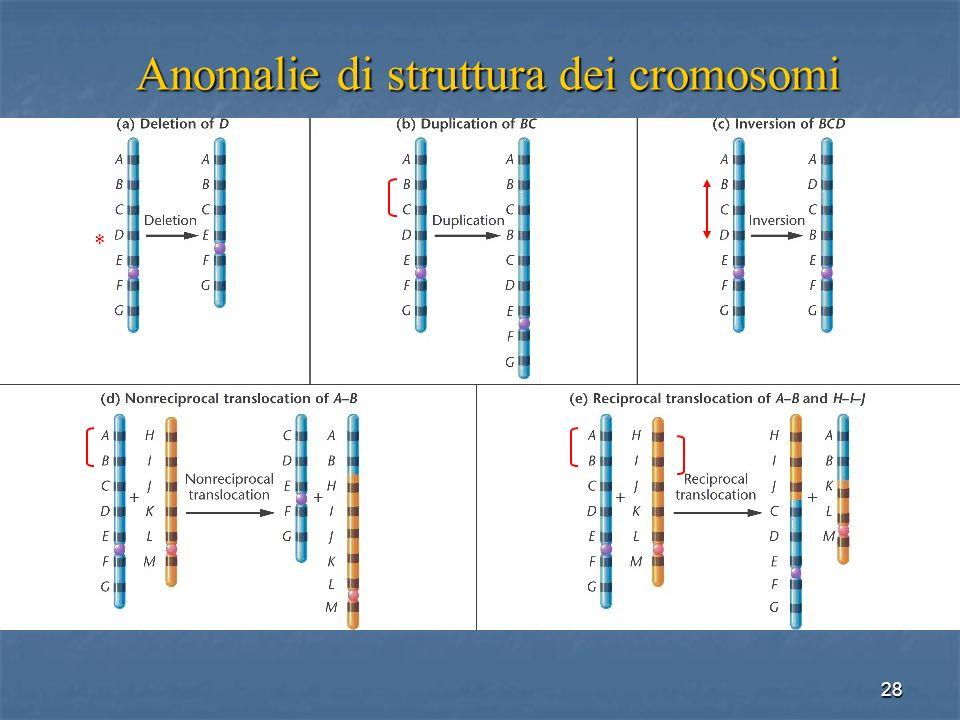 28 Anomalie di struttura dei cromosomi *