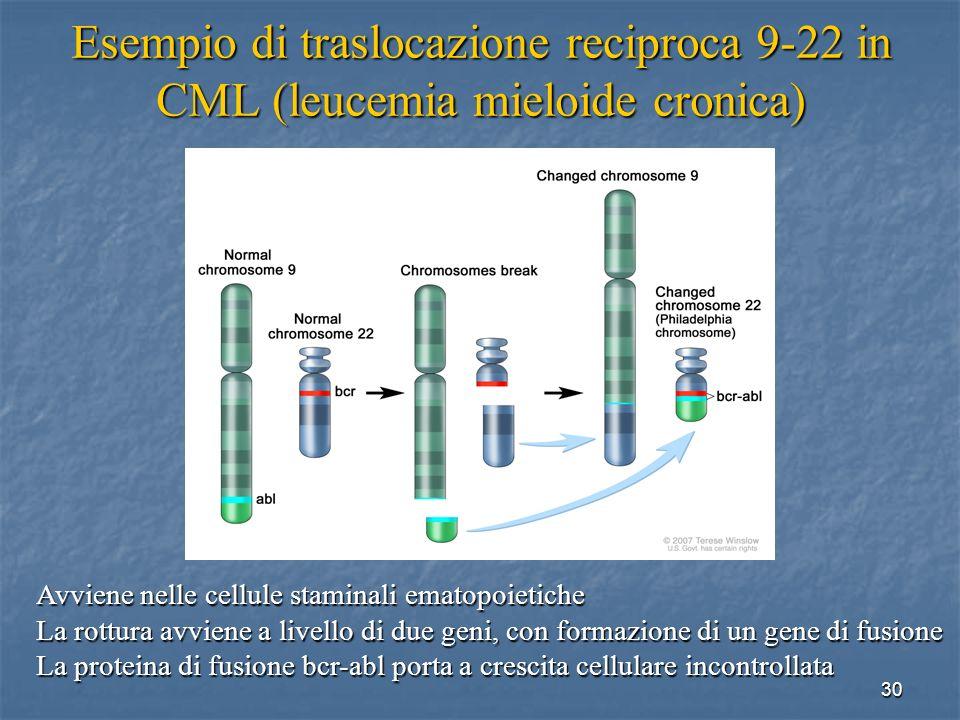 30 Esempio di traslocazione reciproca 9-22 in CML (leucemia mieloide cronica) Avviene nelle cellule staminali ematopoietiche La rottura avviene a live