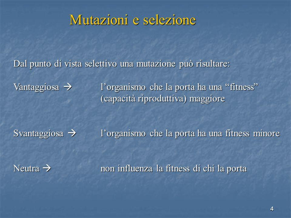 4 Dal punto di vista selettivo una mutazione può risultare: Vantaggiosa lorganismo che la porta ha una fitness (capacità riproduttiva) maggiore Svanta
