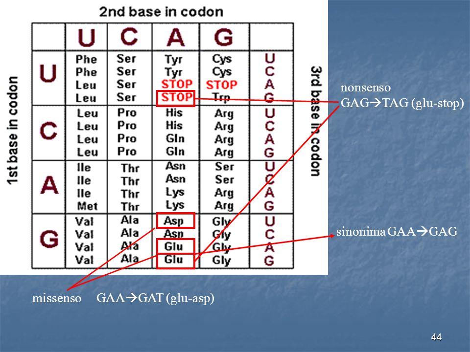 44 missenso GAA GAT (glu-asp) nonsenso GAG TAG (glu-stop) sinonima GAA GAG