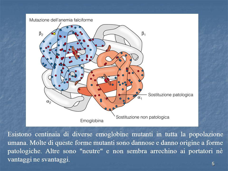 5 Esistono centinaia di diverse emoglobine mutanti in tutta la popolazione umana. Molte di queste forme mutanti sono dannose e danno origine a forme p