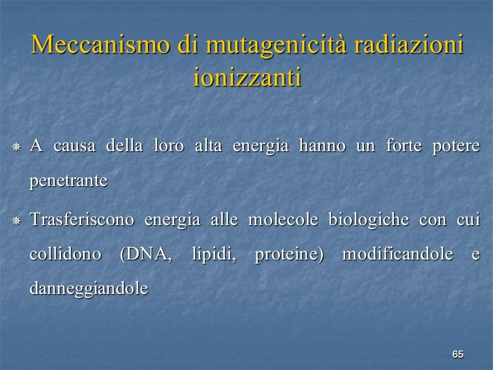 65 Meccanismo di mutagenicità radiazioni ionizzanti A causa della loro alta energia hanno un forte potere penetrante A causa della loro alta energia h