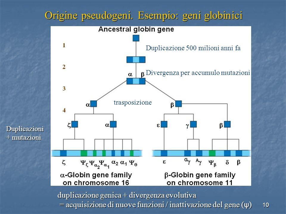 10 Origine pseudogeni. Esempio: geni globinici duplicazione genica + divergenza evolutiva = acquisizione di nuove funzioni / inattivazione del gene (