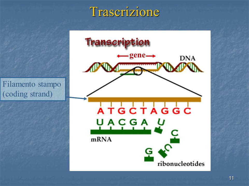 11 Trascrizione gene Filamento stampo (coding strand)