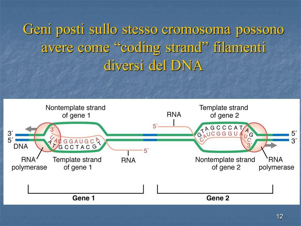12 Geni posti sullo stesso cromosoma possono avere come coding strand filamenti diversi del DNA