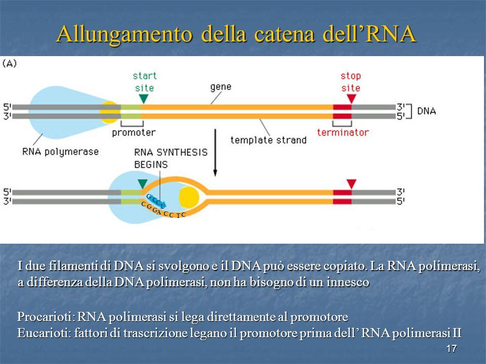 17 Procarioti: RNA polimerasi si lega direttamente al promotore Eucarioti: fattori di trascrizione legano il promotore prima dell RNA polimerasi II I