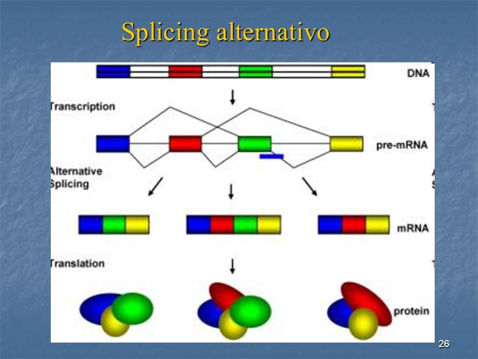 26 Splicing alternativo