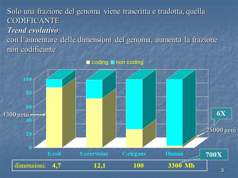 3 Solo una frazione del genoma viene trascritta e tradotta, quella CODIFICANTE Trend evolutivo: con laumentare delle dimensioni del genoma, aumenta la