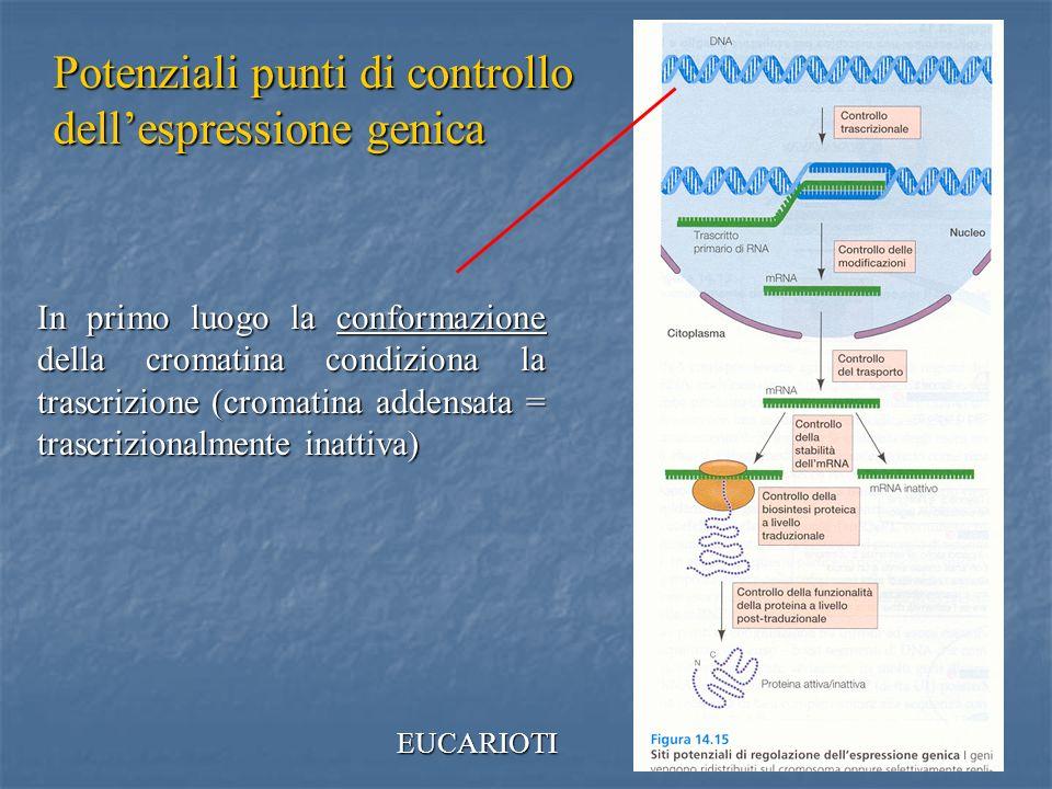 34 In primo luogo la conformazione della cromatina condiziona la trascrizione (cromatina addensata = trascrizionalmente inattiva) EUCARIOTI Potenziali