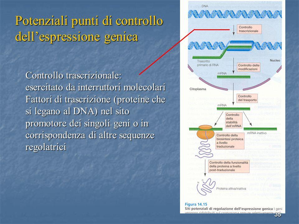 35 Controllo trascrizionale: esercitato da interruttori molecolari Fattori di trascrizione (proteine che si legano al DNA) nel sito promotore dei sing