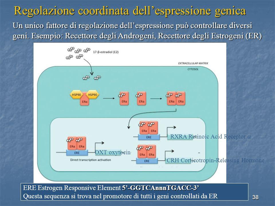 38 Un unico fattore di regolazione dellespressione può controllare diversi geni. Esempio: Recettore degli Androgeni, Recettore degli Estrogeni (ER) Re
