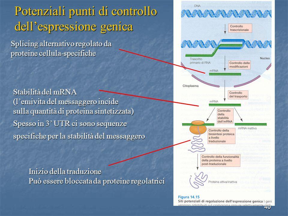40 Splicing alternativo regolato da proteine cellula-specifiche Stabilità del mRNA (lemivita del messaggero incide sulla quantità di proteina sintetiz