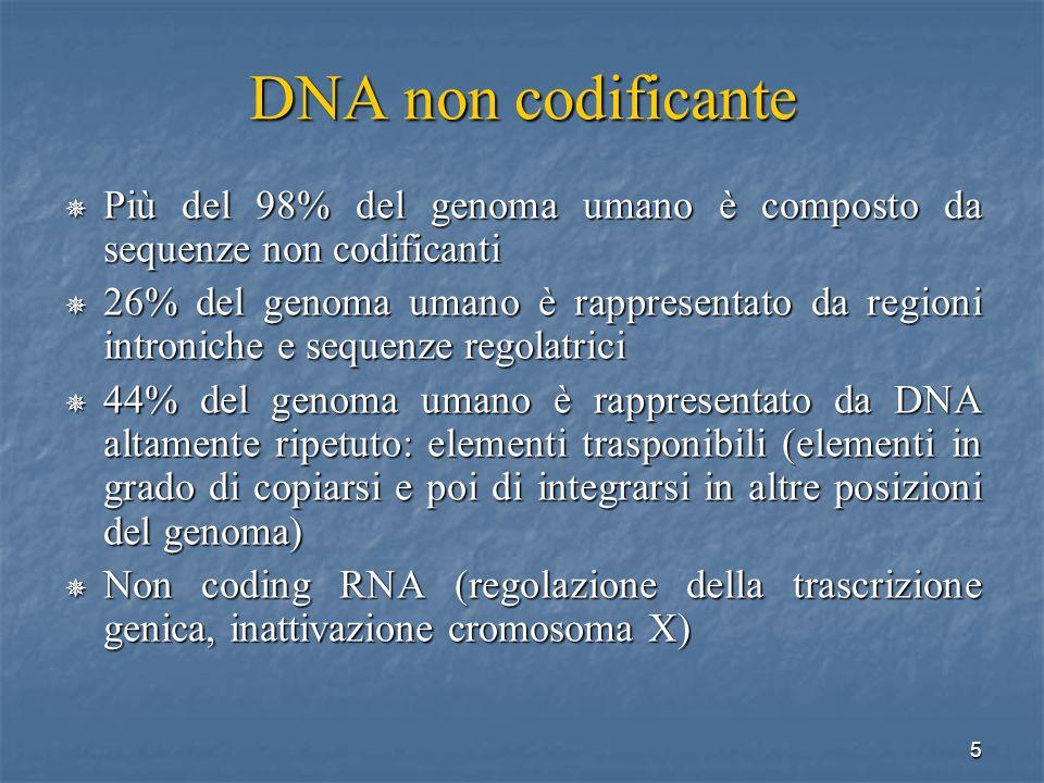 5 DNA non codificante Più del 98% del genoma umano è composto da sequenze non codificanti Più del 98% del genoma umano è composto da sequenze non codi