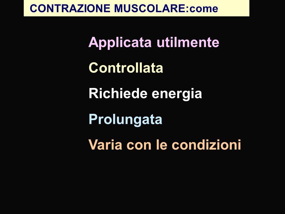 CONTRAZIONE MUSCOLARE: come Generata da interazioni fra actina e miosina Applicata utilmente dal connettivo al tendine; il muscolo viscerale e cardiaco si contraggono in cerchio Controllata volontario & involontario: innervazione; Innervazione e controllo chimico diffuso Richiede energia vascolarizzazione; mitocondri; ATP; glicogeno Prolungata unità muscolari multiple; contrazione di lunga durata (muscolo liscio) Varia con le condizioni sotto tipi di muscolo striato Le diversde modalità di funzionamento richiedono tre tipi di tessuto muscolare