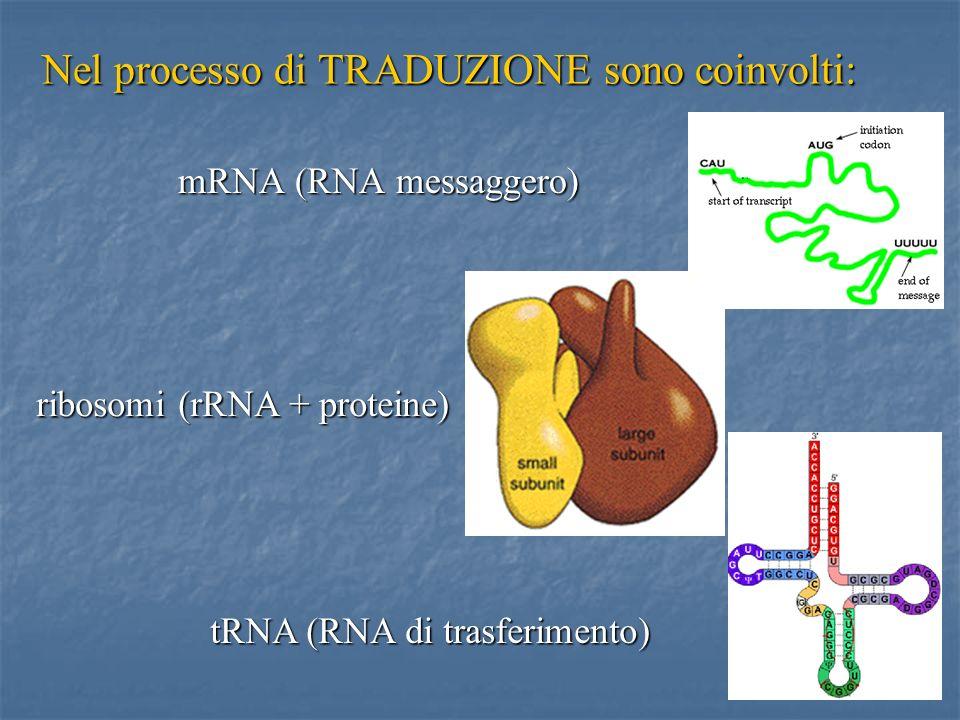 10 Nel processo di TRADUZIONE sono coinvolti: mRNA (RNA messaggero) tRNA (RNA di trasferimento) ribosomi (rRNA + proteine)