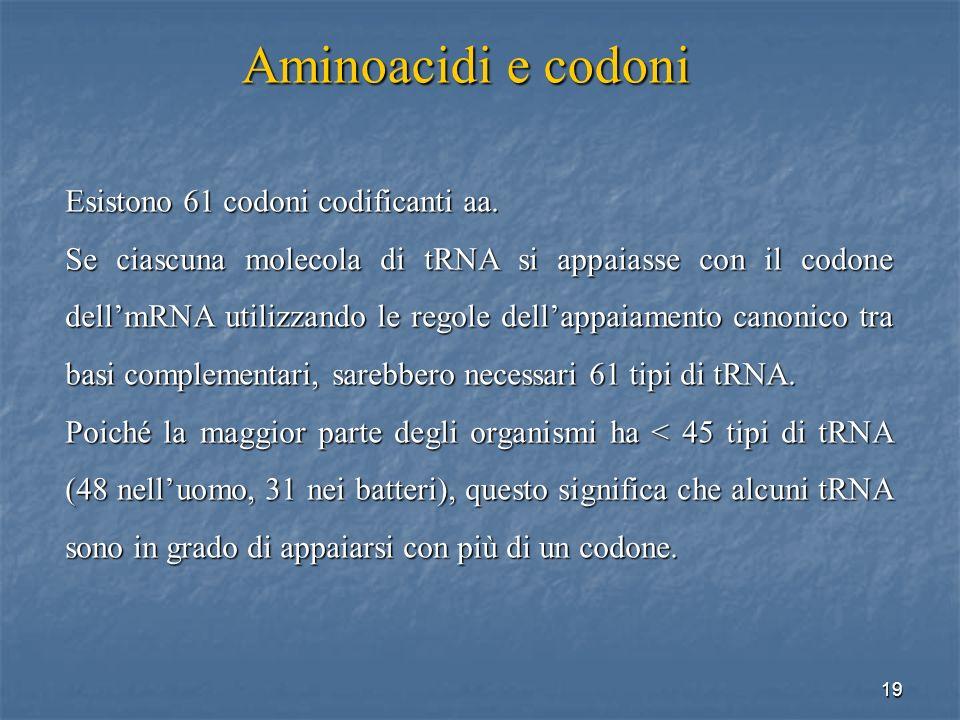 19 Esistono 61 codoni codificanti aa. Se ciascuna molecola di tRNA si appaiasse con il codone dellmRNA utilizzando le regole dellappaiamento canonico