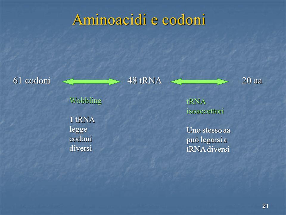 21 61 codoni48 tRNA20 aa Aminoacidi e codoni Wobbling 1 tRNA legge codoni diversi tRNA isoaccettori Uno stesso aa può legarsi a tRNA diversi