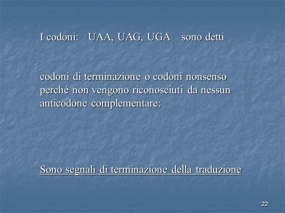 22 I codoni: UAA, UAG, UGA sono detti codoni di terminazione o codoni nonsenso perché non vengono riconosciuti da nessun anticodone complementare: Son