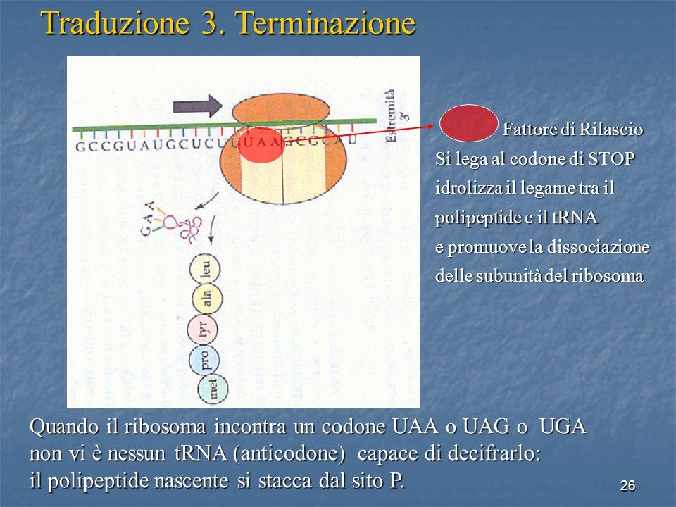 26 Quando il ribosoma incontra un codone UAA o UAG o UGA non vi è nessun tRNA (anticodone) capace di decifrarlo: il polipeptide nascente si stacca dal