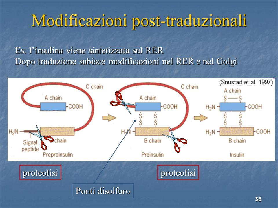 33 Es: linsulina viene sintetizzata sul RER Dopo traduzione subisce modificazioni nel RER e nel Golgi Modificazioni post-traduzionali proteolisiproteo