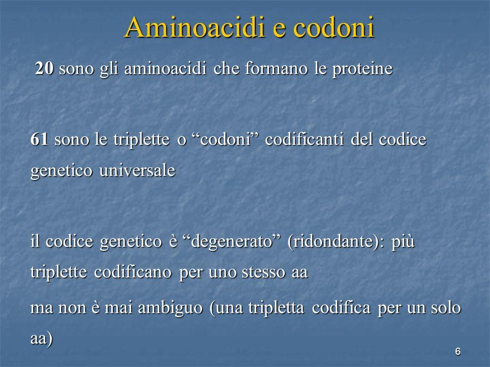 17 Aminoacidi e codoni 20 sono gli aminoacidi che formano le proteine 61 sono le triplette o codoni del codice genetico universale esistono tanti tRNA quanti sono i codoni.