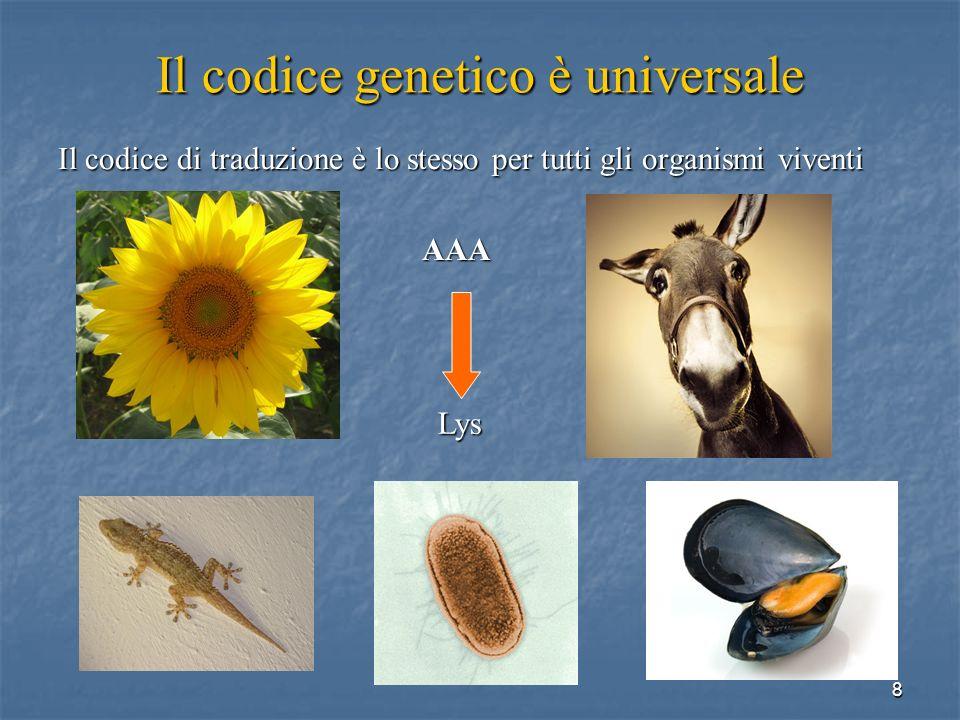 8 Il codice genetico è universale Il codice di traduzione è lo stesso per tutti gli organismi viventi AAA Lys