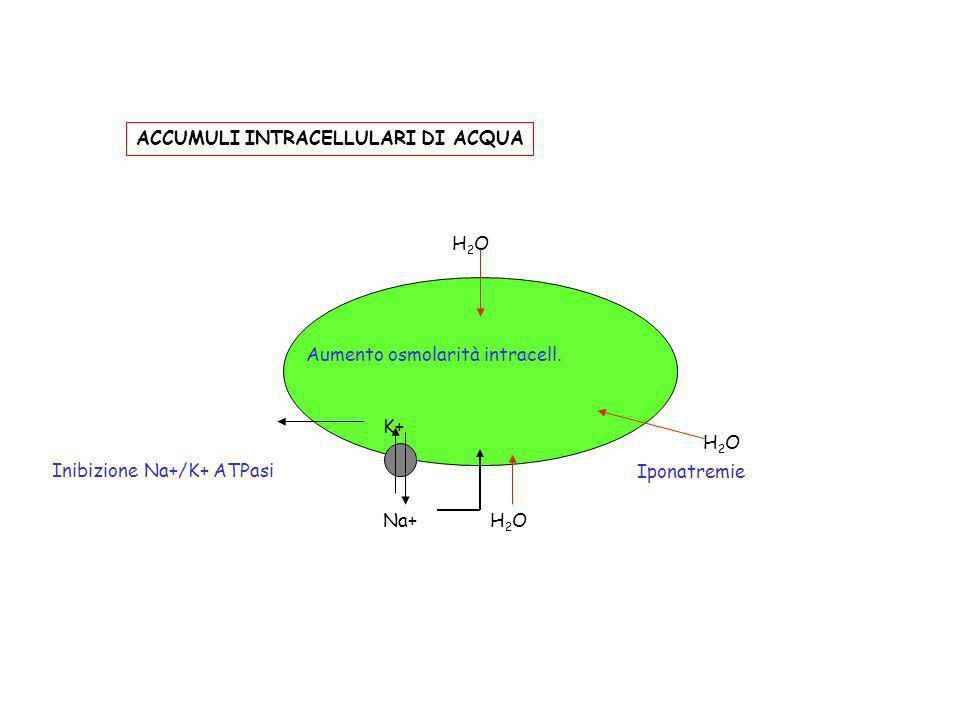 Iponatremie H2OH2O Na+ K+ Inibizione Na+/K+ ATPasi H2OH2O Aumento osmolarità intracell. H2OH2O ACCUMULI INTRACELLULARI DI ACQUA