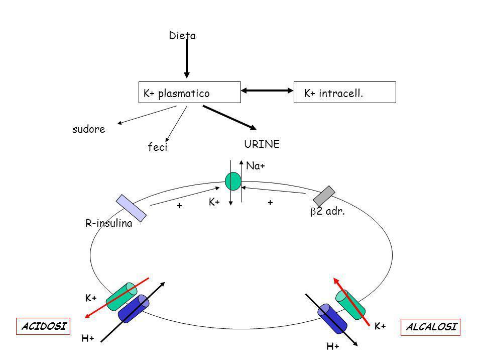 Dieta K+ plasmaticoK+ intracell. sudore feci URINE Na+ K+ 2 adr. R-insulina + + H+ K+ ACIDOSI H+ K+ ALCALOSI