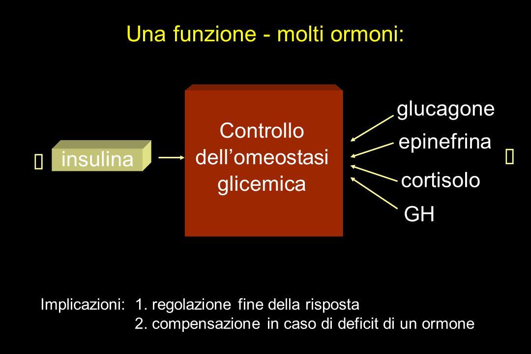Una funzione - molti ormoni: Controllo dellomeostasi glicemica glucagone epinefrina cortisolo GH insulina Implicazioni: 1. regolazione fine della risp