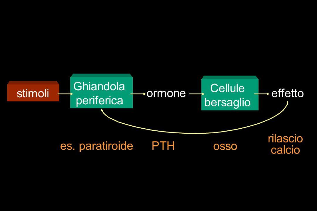 stimoliGhiandola periferica ormone Cellule bersaglio effetto rilascio calcio osso PTHes. paratiroide