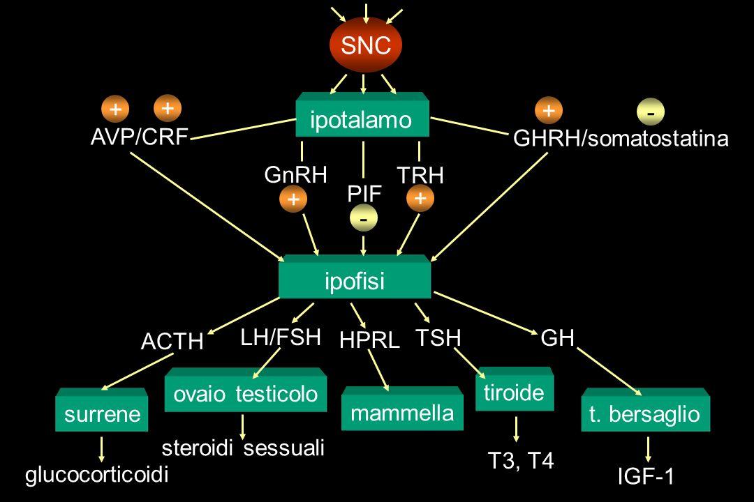 ipotalamo ipofisi SNC + AVP/CRF + ACTH surrene glucocorticoidi GnRH + ovaio testicolo LH/FSH steroidi sessuali PIF - mammella HPRL TRH + tiroide T3, T