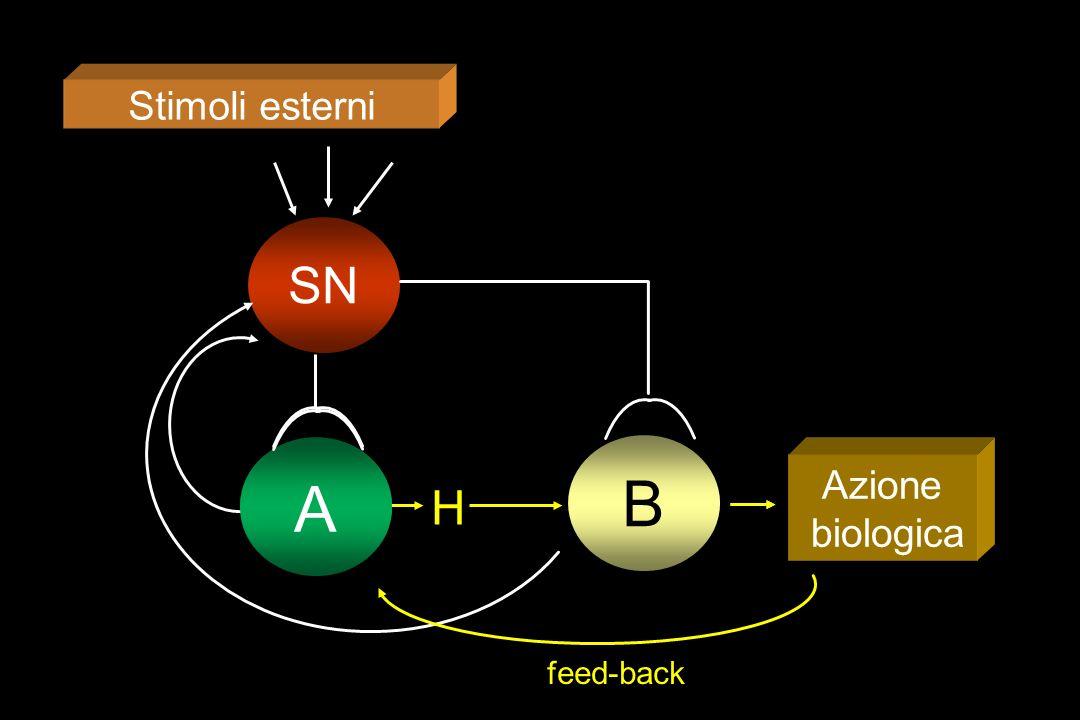 Stimoli esterni SN A B H Azione biologica A feed-back