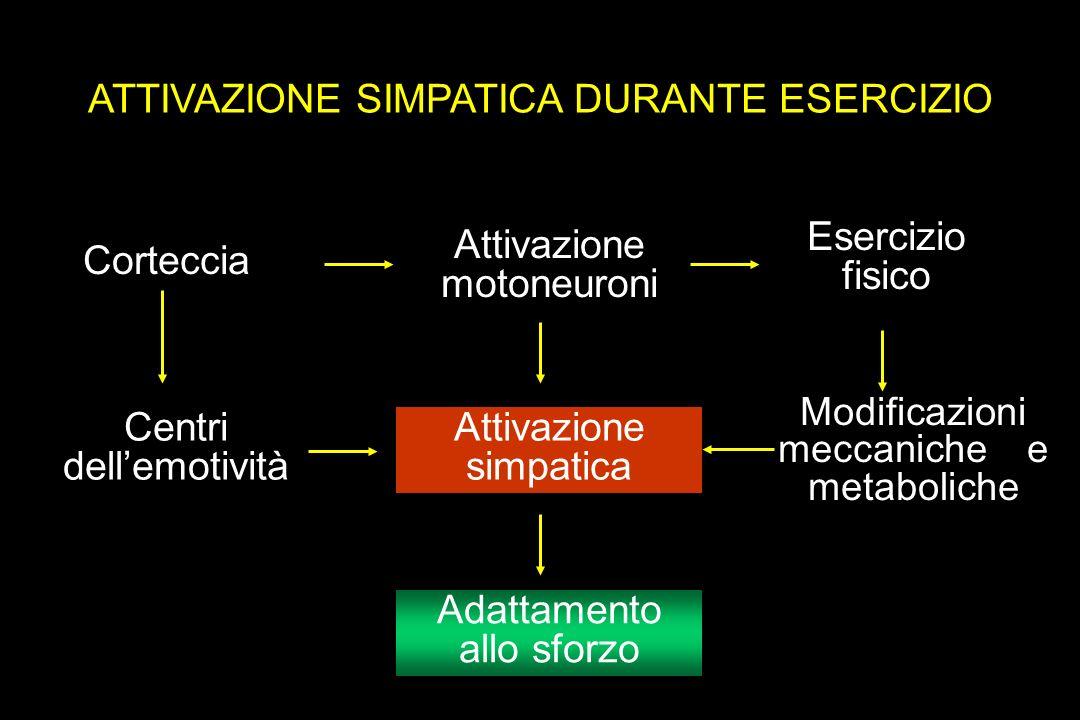 ATTIVAZIONE SIMPATICA DURANTE ESERCIZIO Corteccia Attivazione motoneuroni Esercizio fisico Adattamento allo sforzo Attivazione simpatica Centri dellemotività Modificazioni meccaniche e metaboliche